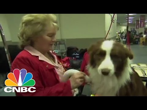 The True Price of a Puppy | $ave Me! | CNBC
