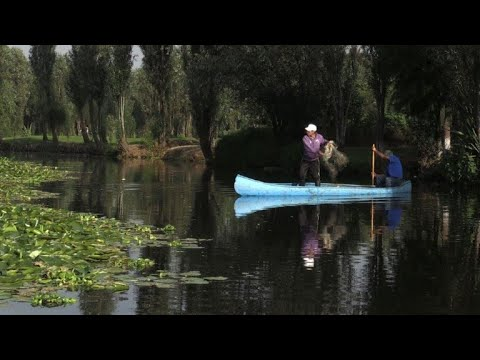 Dwindling fishermen trade leaves Mexican canals vulnerable