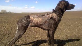 Одежда для собак! Жилет для собаки! Одежда для собак своими руками! Выкройка жилета!