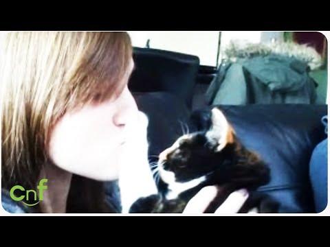 Cute Cat Fails Compilation | Furry Fails