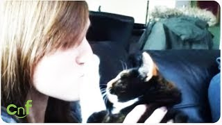 Cute Cat Fails Compilation   Furry Fails