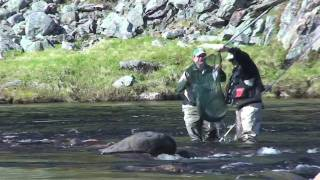 Kharlovka, Litza & Rynda-Salmon Fishing on the Kola Peninsula