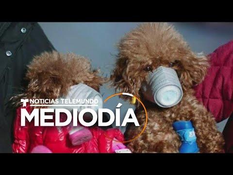 Muchos dueños de mascotas en China le ponen máscaras para evitar el contagio de COVID-19, conocido c