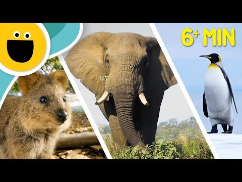 Wild Clips Animals Compilation | Animal Songs for Kids (Sesame Studios)