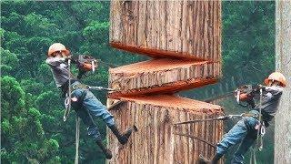 أسرع  و أشجع  العمال في العالم , قدرات غير عادية .. !!