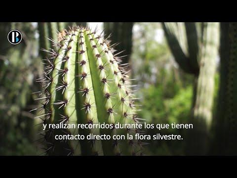 México posee el santuario de cactus más grande del mundo