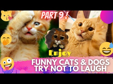 🤣 It's TIME for SUPER LAUGH! 🤣FUNNY CATS & DOGS🙀🐶BEST FUNNY MOMENTS PART 9 🤪 | TRY NOT TO LAUGH 🤭