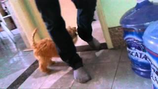 Baixar Cachorro Spider Mordendo a calça do Rodrigo.mp4