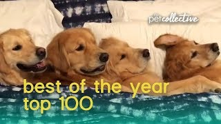 Best Pets of the Year 2019 (Top 100) | The Pet Collective