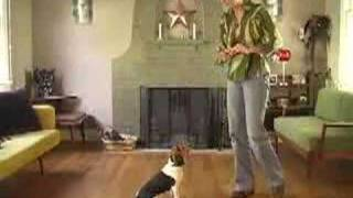 How To Train A Beagle : How To Teach Your Beagle To Sit Using These Dog Obedience Training Tips & Techniques