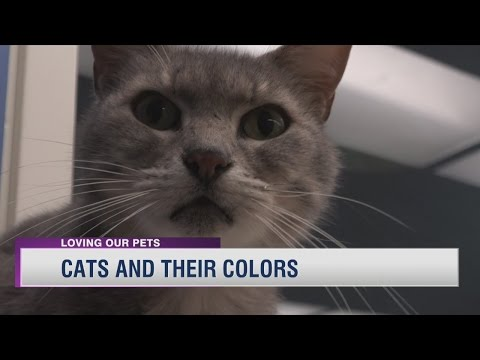 Cats and Their Colors