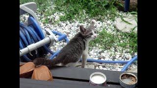 #65 野良猫だったビビ - Bibi's childhood -