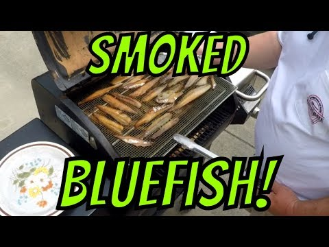 Smoked Bluefish Catch & Cook