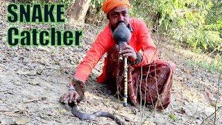देखे खतरनाक ब्लैक किंग कोबरा को जड़ी-बूटी सुंघाकर कैसे पकड़ा जाता है King Cobra Control