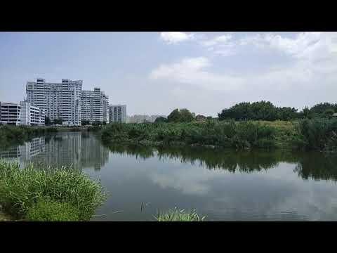 Sounds of nature, lake, ducks, birds/Звуки природы, озеро, утки, птицы