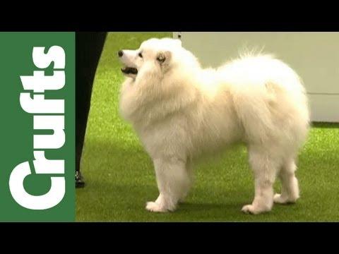 Kennel Club Junior Warrant Winner of the Year - Final - Crufts 2012