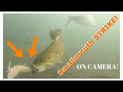 Smallmouth Bass STRIKES MINNOW On Camera! GoPro In A Spillway!