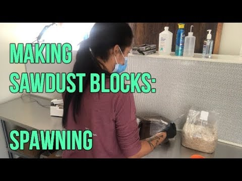 Part 3: Making sawdust mushroom blocks: Spawning