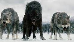 Twilight Wolves - Wolves