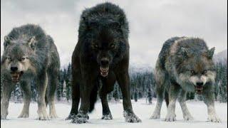 Baixar Twilight Wolves - Wolves
