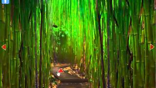 Bamboo Forest Escape Video Walkthrough