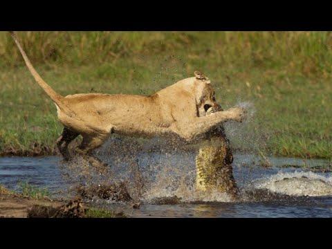 10 Сумасшедших битв животных снятых на камеру людьми / Часть 5