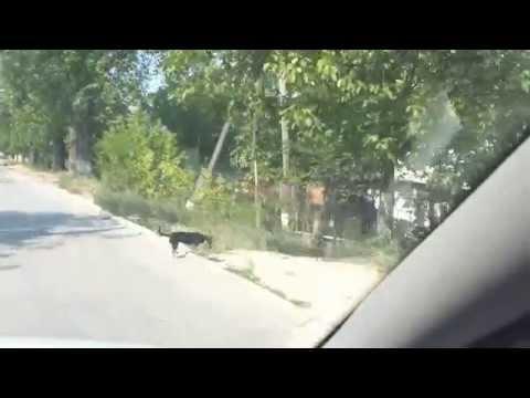 Nisporeni(Varzaresti) Moldova
