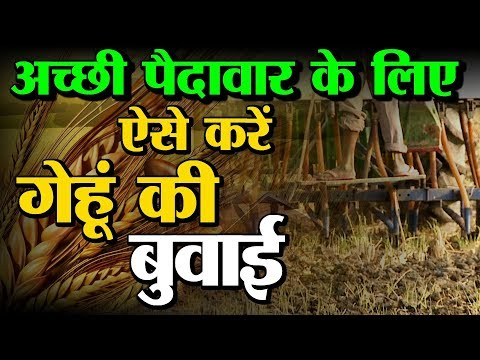 Wheat Farming: (गेंहू की खेती )  In Baatein kheti ki - On  Green TV