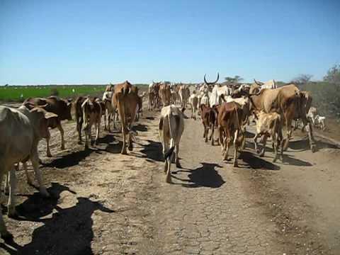 Southern Mauritania Traffic Jam