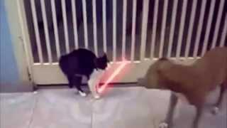 Cand pisicutele o apuca pe cai nebanuite :))