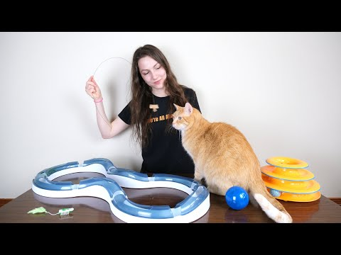 Top 5 Best Cat Toys (We Tested Them All)