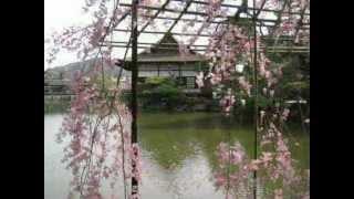 Ландшафтный дизайн. Курсы. Японский сад.