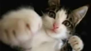 Кошки танцуют / Dancing cat