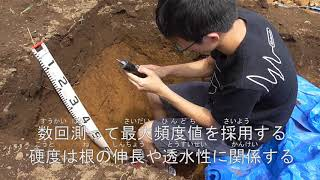 土壌の断面調査