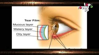 Important Facts About Your Eye (Vision)