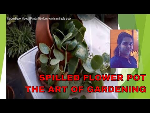 Spilled Flower Pot || Video on The Art of Gardening