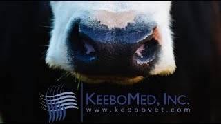 Farm Cow Diagnosed 54 Days Pregnant with RKU-10 Ultrasound Machine