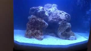 Aquário Boyu TL450 Nano Reef  - Primeiro Dia