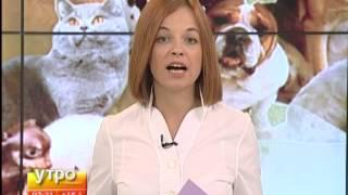 Стоимость профессионального ухода в хабаровских салонах для домашних животных