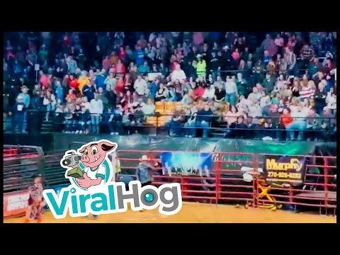Bob Hauer - Bull Tosses Contestants During Cowboy Pinball