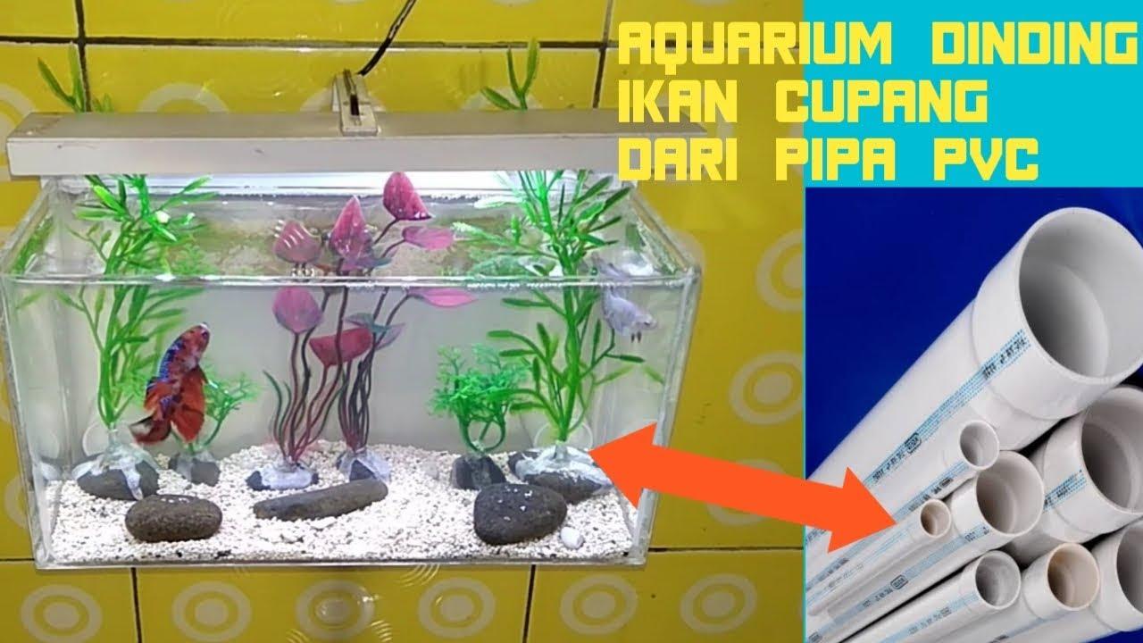 Cara Membuat Aquarium Dinding Unik Untuk Ikan Cupang Dari Pipa Pvc Youtube