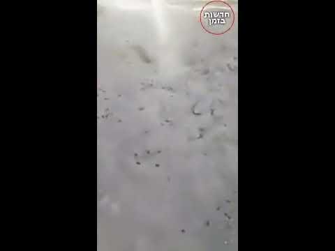 מכת ארבה באיראן! בקרוב גם חושך ובכורות חחח