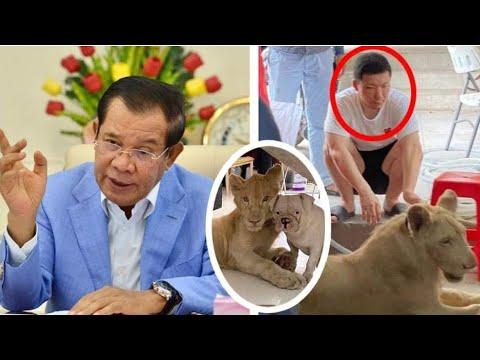 Hot!  Samdech Techo Hun Sen allows lion owners to raise them, but must abide by the following condit