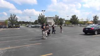 Suburban K9 Dog Training - Teaching Dogs To Heel In Public.