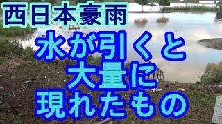 【西日本豪雨】増水から水が引くと大量に現れたもの thumbnail