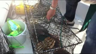 (有)こうじや(お弁当の万年屋) 大洗町漁業協同組合 (スーパーマーケットトレードショー2014) 北海道の東部に位置する別海町の尾岱沼は、「北海シマエビ」の産地です。