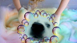 Как я купаю свою собаку.