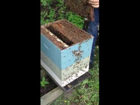 Beekeeping: Pollen Trapping with Mike Palmer