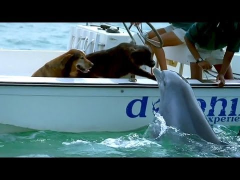 Dolphin Kisses Dog, Jumps For Joy!