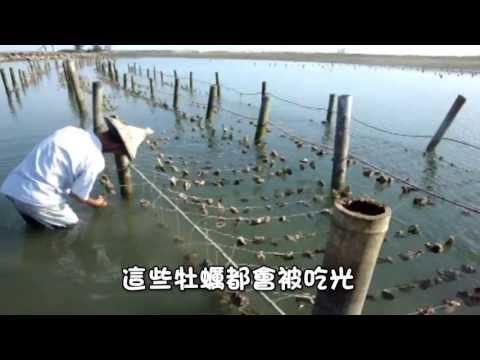 一個地方一個故事-嘉義縣東石鄉白水湖